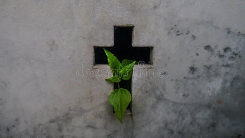 """Cirkuleringen av liv-, liv- och död†""""planterar att fjädra ut ur en gravvalv på den LaRecoleta kyrkogården i Buenos Aires arkivfoton"""