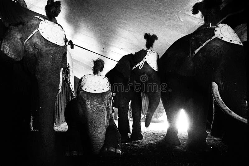 Cirkus Medrano - Cirque Medrano arkivfoton