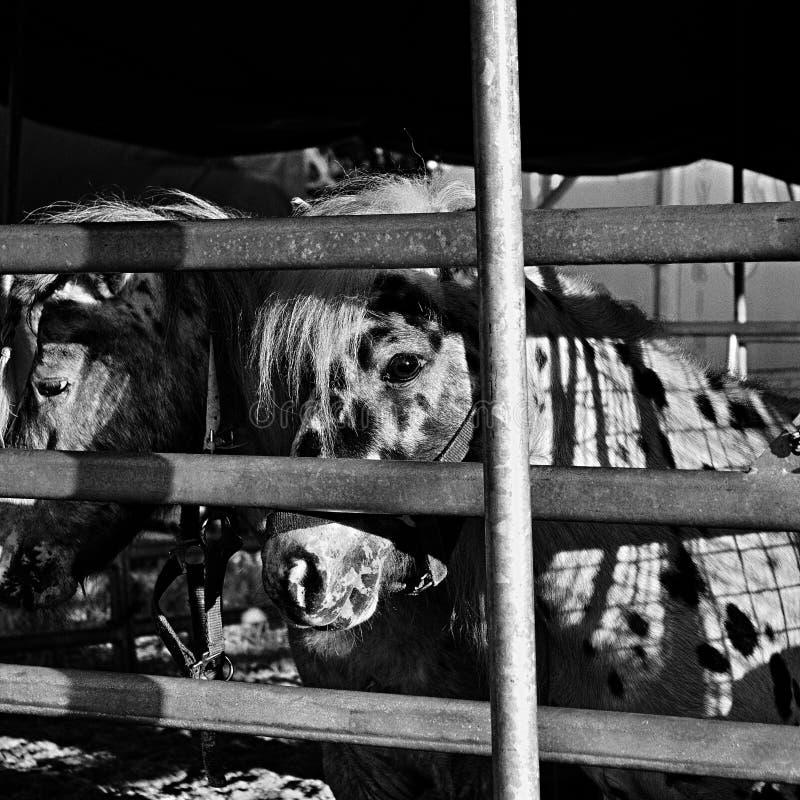 Cirkus19 Free Public Domain Cc0 Image