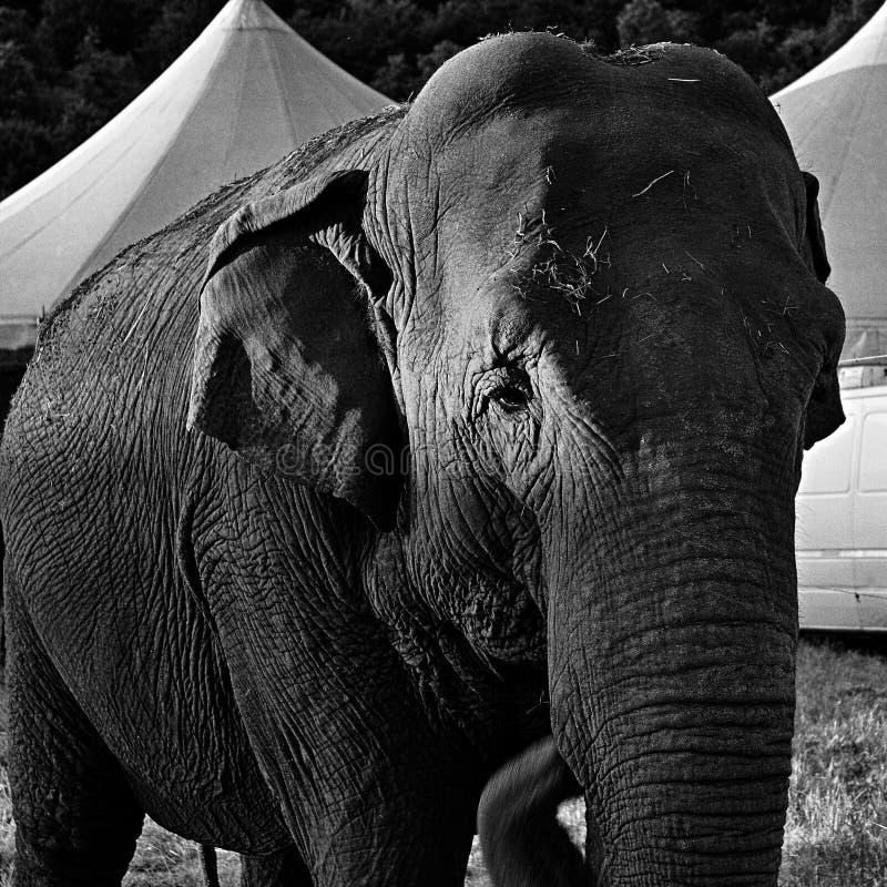 Cirkus20 Free Public Domain Cc0 Image