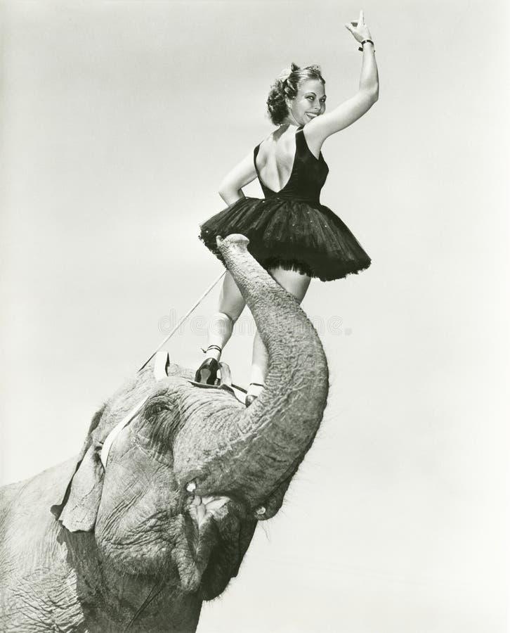 Cirkusartisten står på elefantens huvud fotografering för bildbyråer
