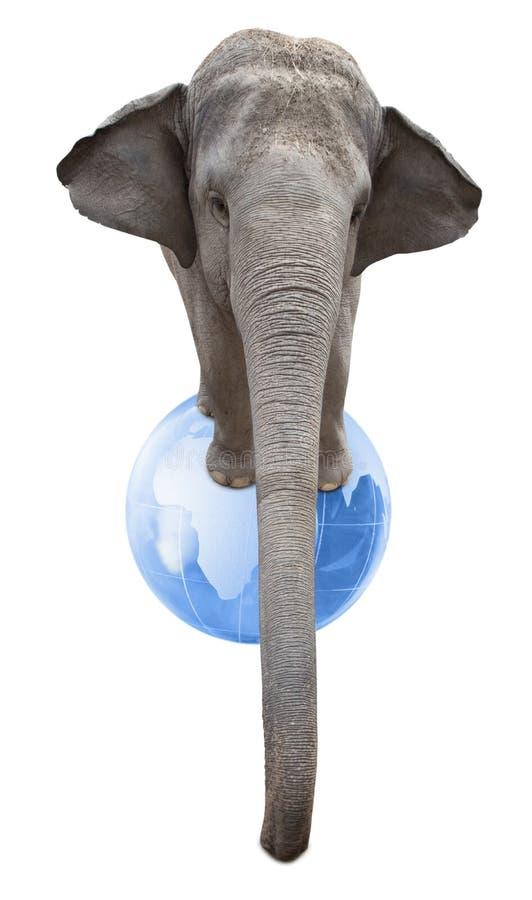 Cirkuselefant royaltyfria foton