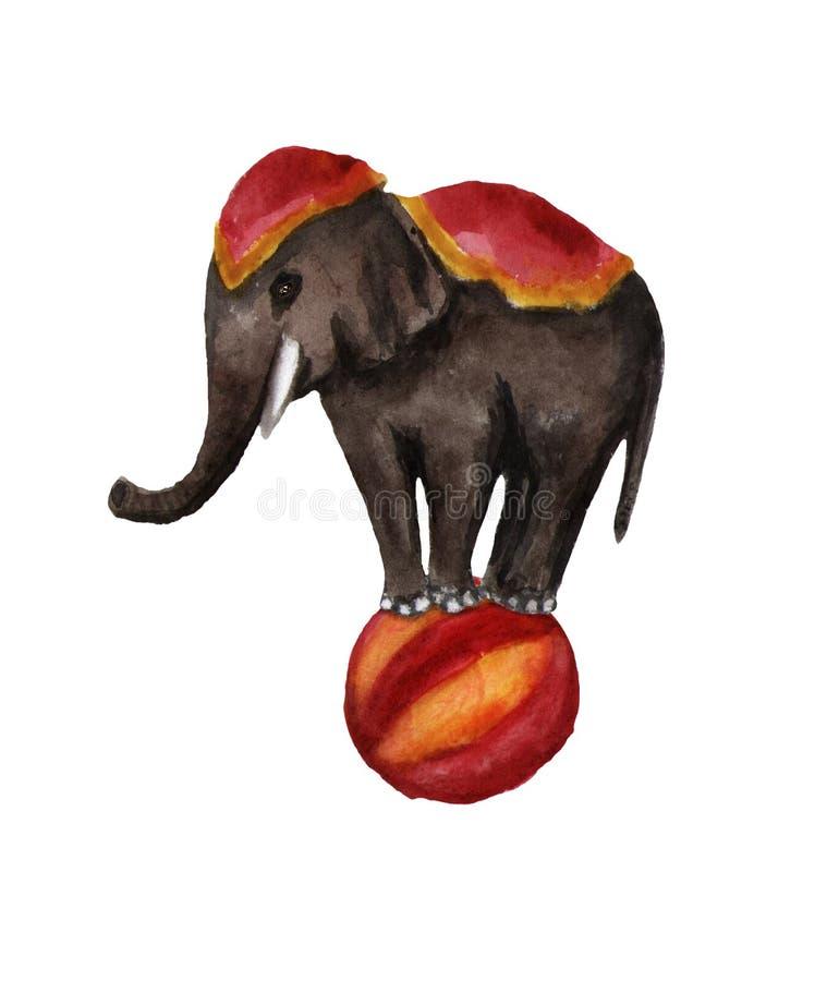 Cirkuselefant som rider bollen Vattenf?rgillustration p? vit royaltyfria foton