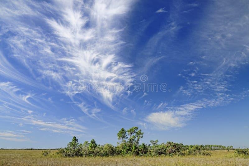 Cirrus Au-dessus des marais de la Floride photographie stock libre de droits