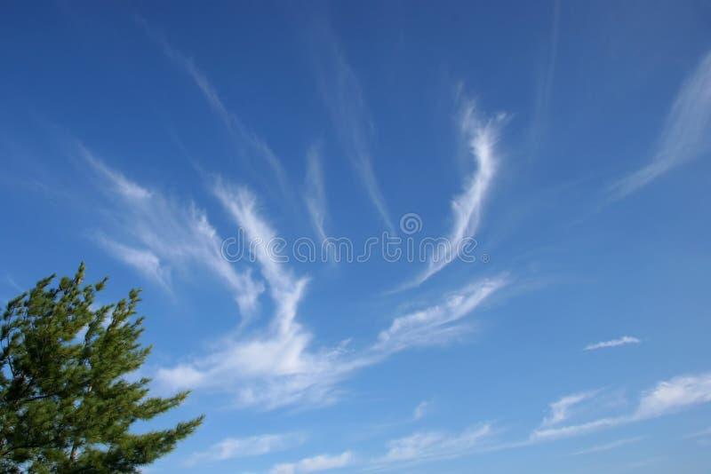 Cirrus-Wolken #1 stockbilder
