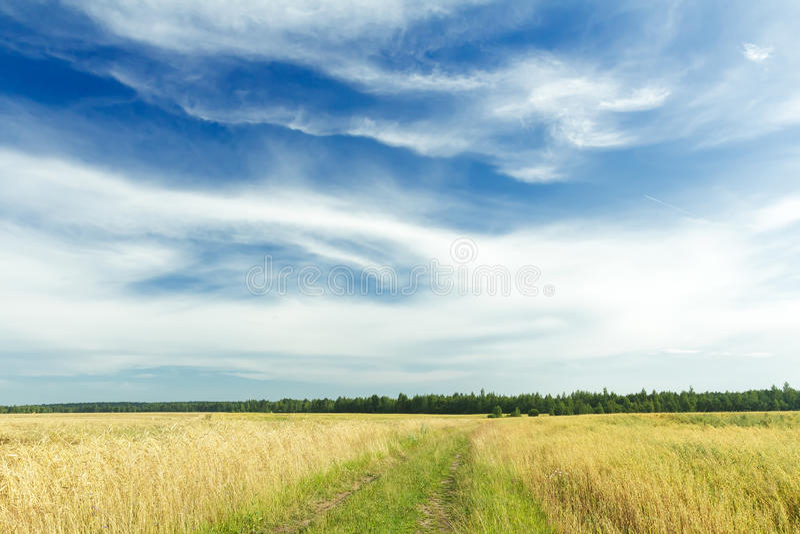 Cirruswolken op azuurblauwe hemel boven roggegebied en landweg royalty-vrije stock afbeelding