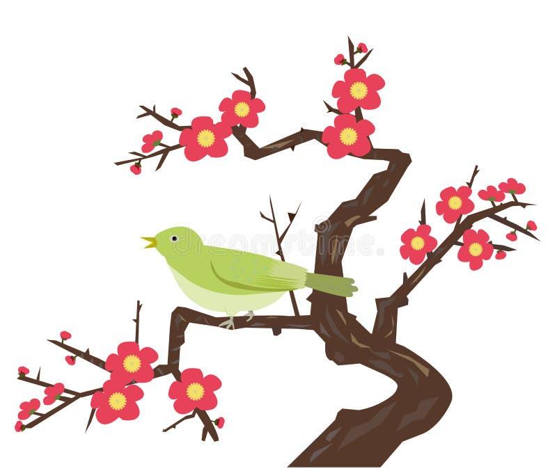 Ciruelo-flores y una curruca japonesa del arbusto imagen de archivo