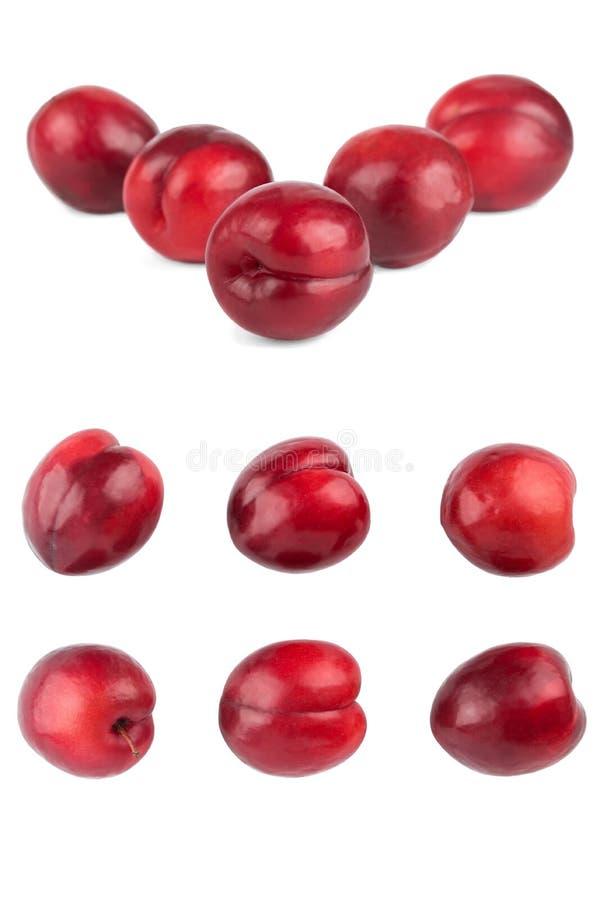 Ciruelos aislados Colección de frutas rojas enteras del ciruelo aisladas encendido imagen de archivo
