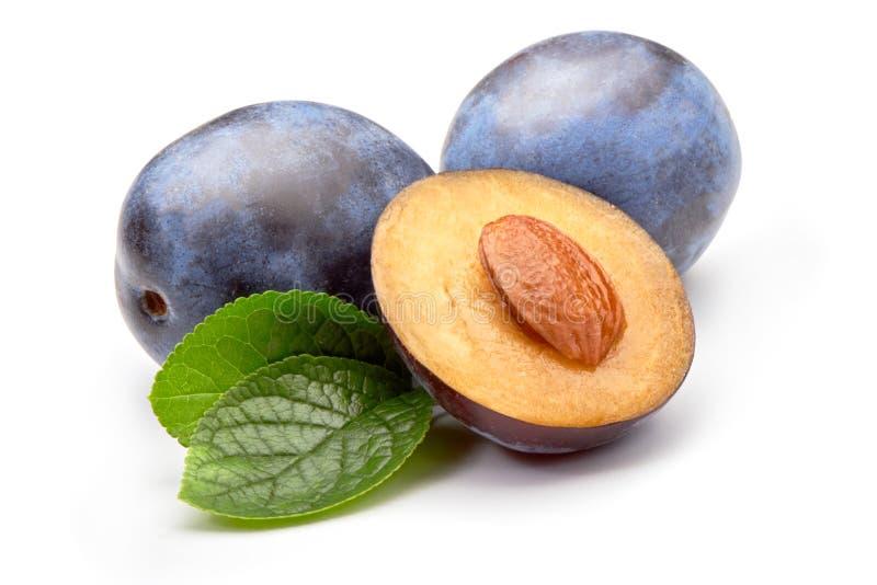 Ciruelos aislados Uno y medio de la fruta azul del ciruelo con las hojas aisladas en el fondo blanco imagen de archivo
