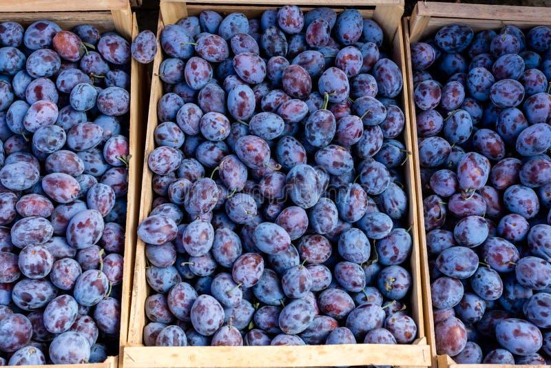 Ciruelos azules orgánicos frescos en el mercado de los granjeros Frutas maduras del ciruelo en las cajas Comida sana del vegano fotografía de archivo libre de regalías