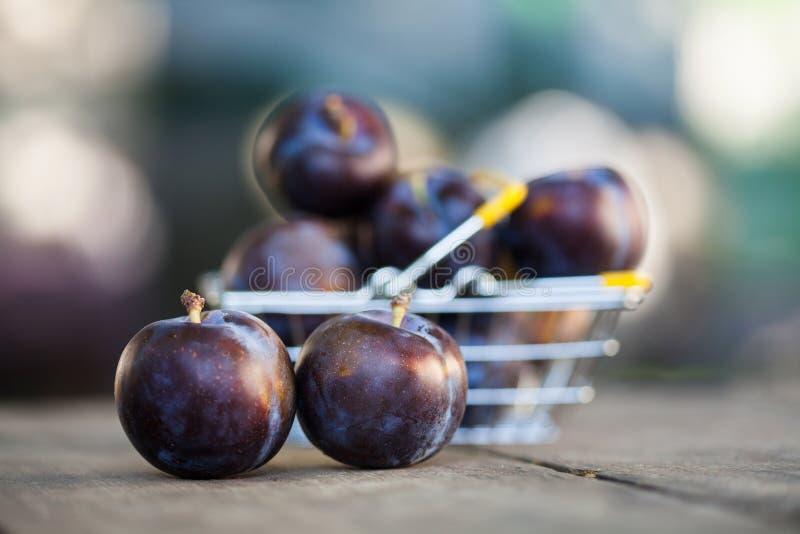 Ciruelos azules orgánicos hermosos en cesta de compras De los granjeros de las frutas todavía de la cosecha escena de la vida Cam imágenes de archivo libres de regalías