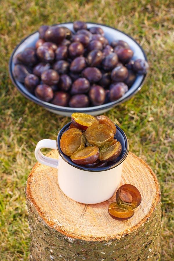 Ciruelos en taza metálica en tocón de madera en jardín el día soleado fotos de archivo libres de regalías