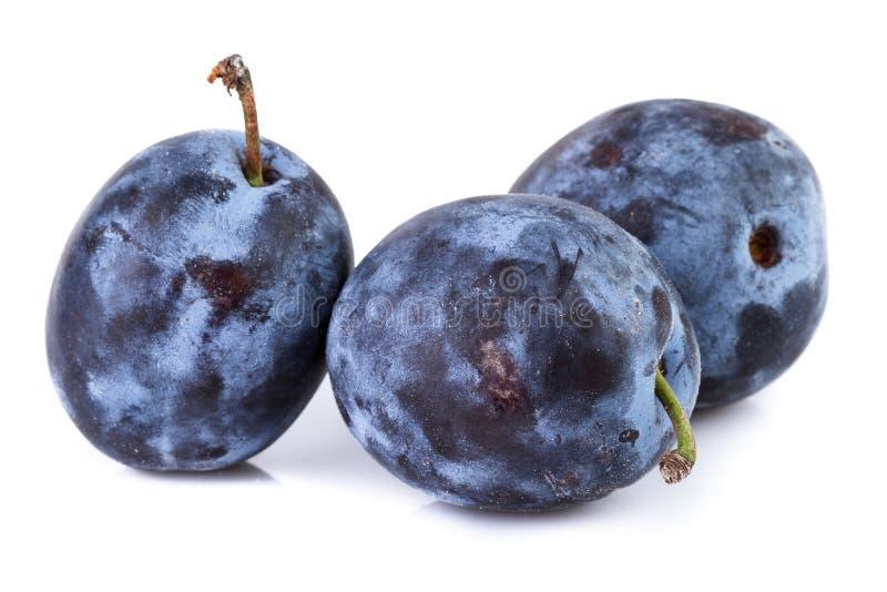 Ciruelos maduros en primer en blanco Frutas orgánicas fotos de archivo libres de regalías