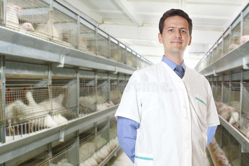 Cirurgião veterinário imagem de stock royalty free