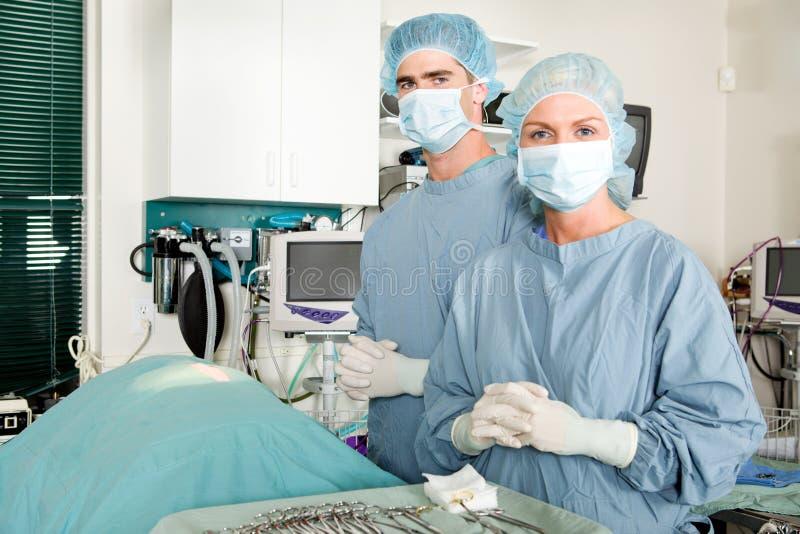 Cirurgia do veterinário fotografia de stock royalty free