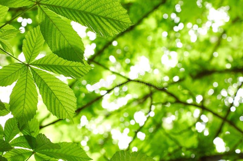 Cisawego drzewa liście zdjęcia royalty free