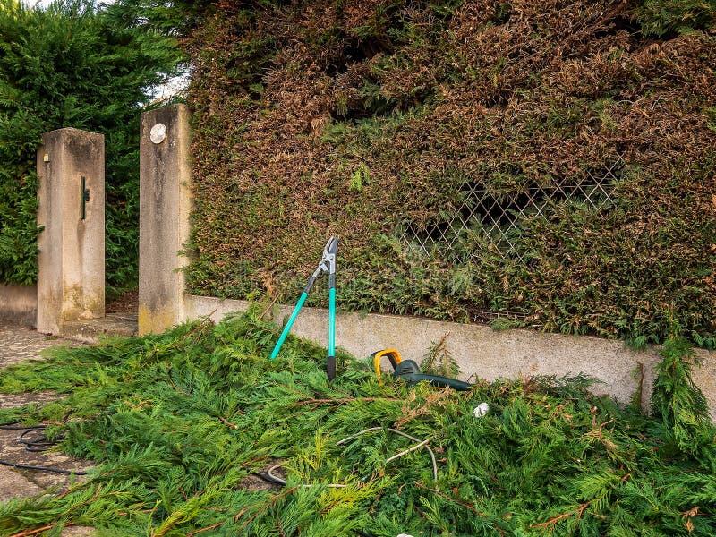 Ciseaux de jardinage au sol sur les branches du cyprès après travail de jardin sur équilibrer des haies photographie stock