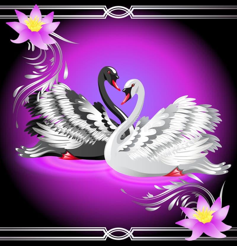 Cisne blanco y negro y lirios stock de ilustración