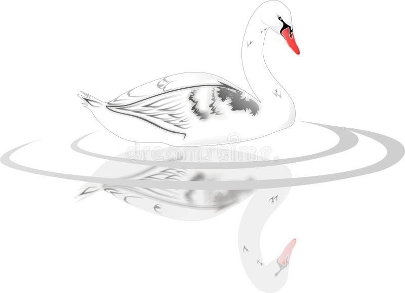 Cisne branca - vetor ilustração do vetor