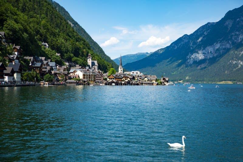 Cisne de Hallstadt Áustria da paisagem do lago fotografia de stock