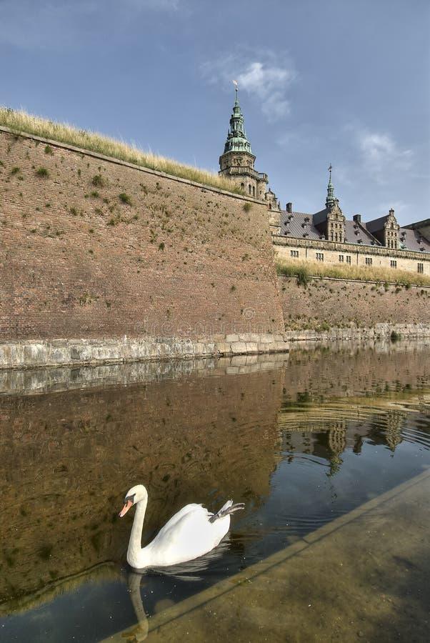 Cisne en el castillo de Hamlet de Kronborg imagenes de archivo