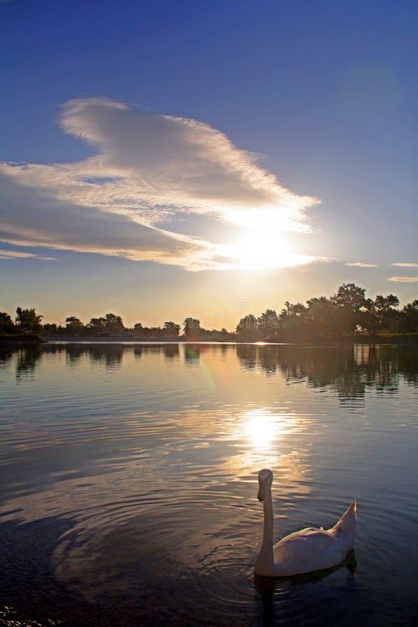 Download Cisne en el lago imagen de archivo. Imagen de blanco, nube - 193233