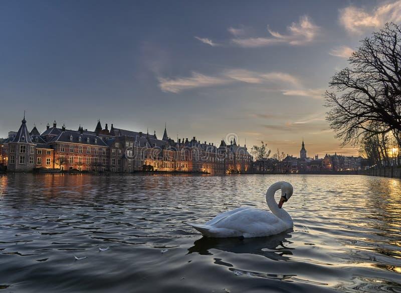 Cisne gracioso na frente do hofvijver Den Haag da construção histórica foto de stock