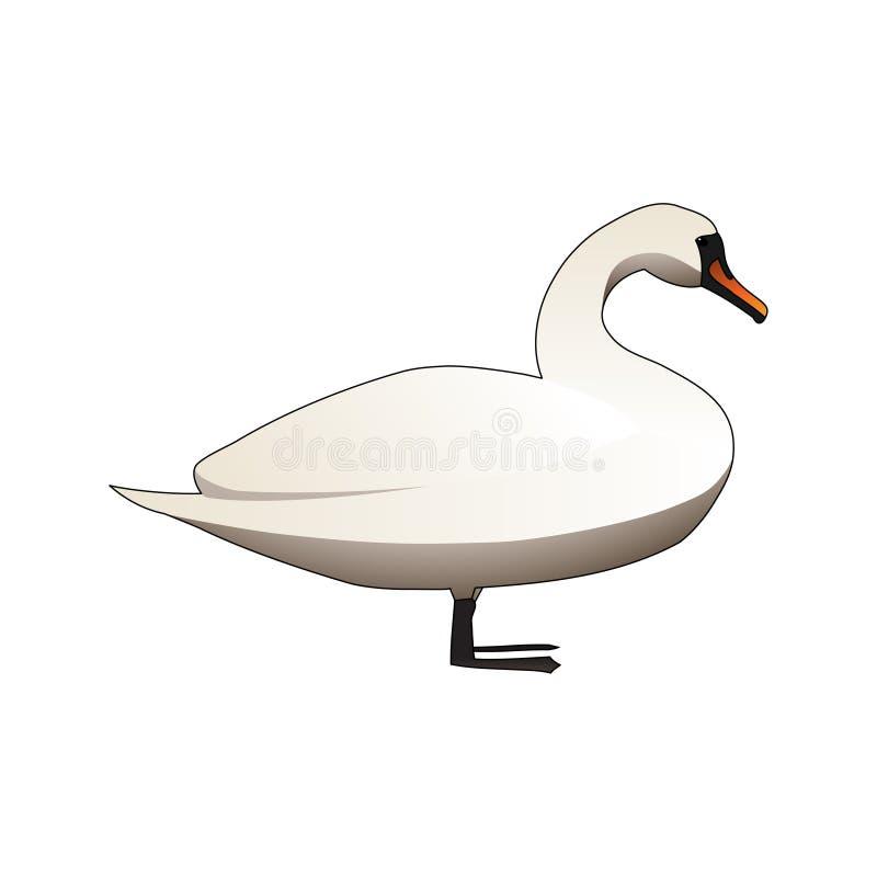Cisne mudo blanco stock de ilustración