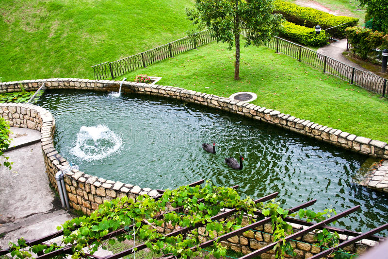 A cisne preta no parque imagem de stock royalty free