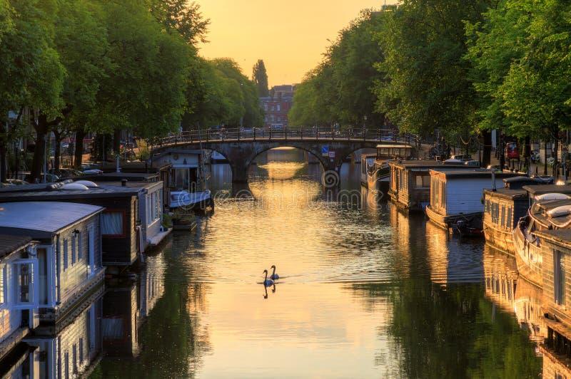Cisnes Amsterdam de la salida del sol fotos de archivo