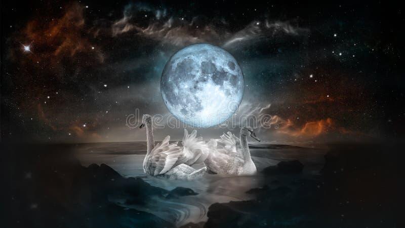 Cisnes brancas sob a lua do tolo fotos de stock royalty free