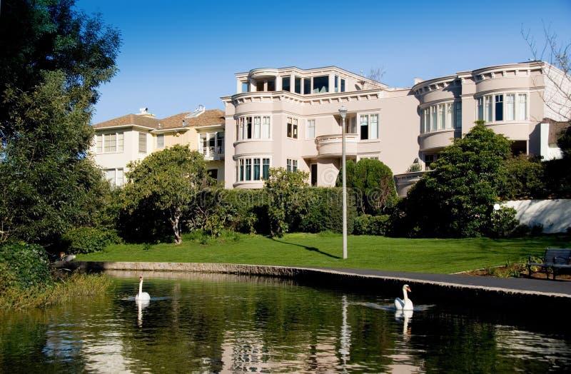 Cisnes de San Francisco imagem de stock