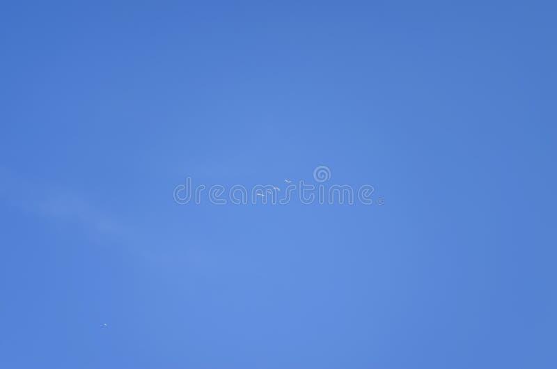 Cisnes de Whooper que voam no céu imagens de stock