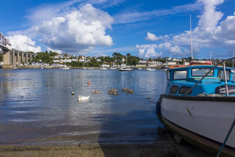 Cisnes e sinetes em um riveer Saltash Cornualha Inglaterra Reino Unido fotos de stock royalty free