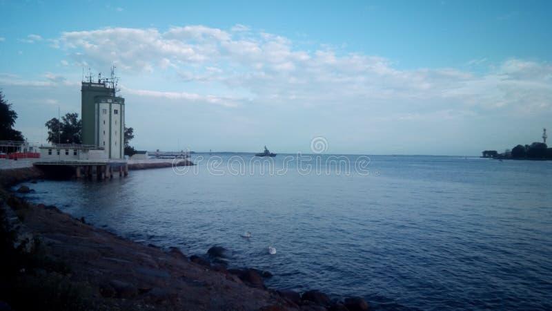 Cisnes en el mar Báltico imagenes de archivo