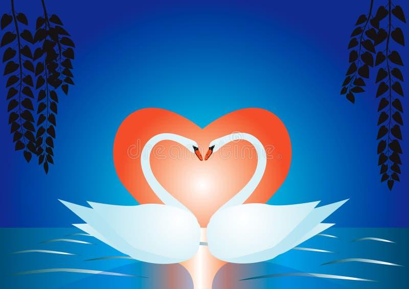 Cisnes en un lago libre illustration