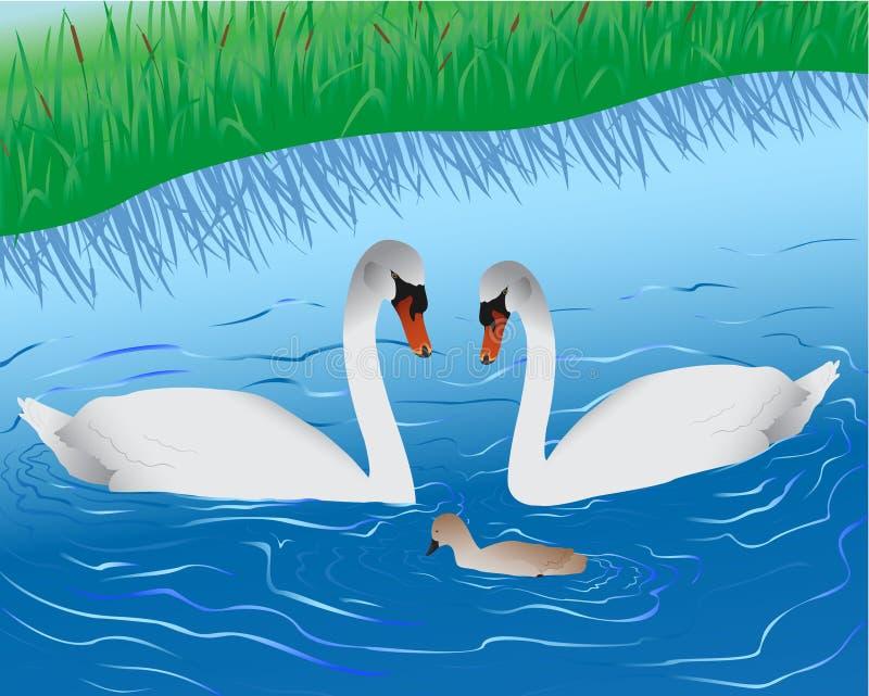 Cisnes no lago ilustração royalty free