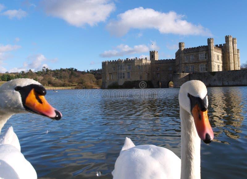 Cisnes y castillo imágenes de archivo libres de regalías