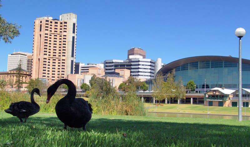 Cisnes y ciudad fotografía de archivo libre de regalías