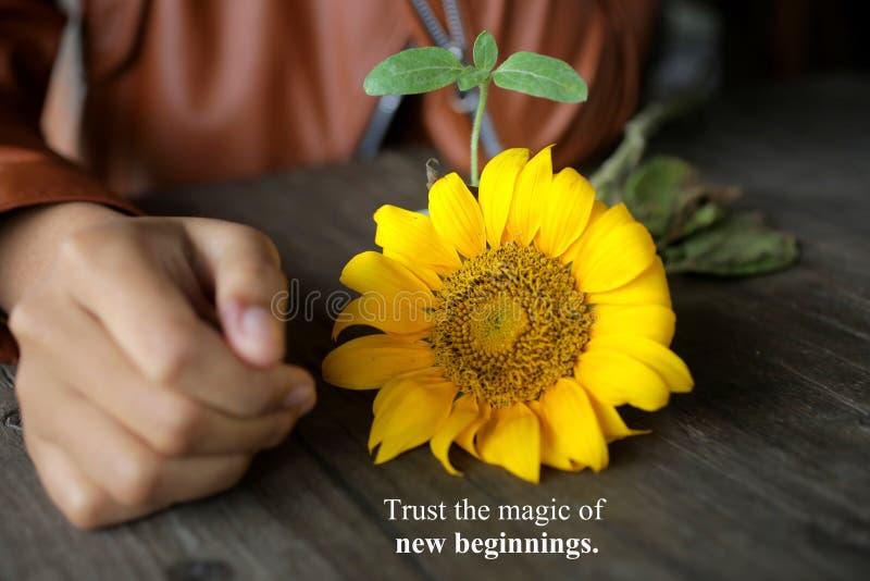 Citação inspiradora - confie na magia dos novos começos Com a mão de uma jovem mulher, o girassol amarelo floresce e sua planta imagens de stock
