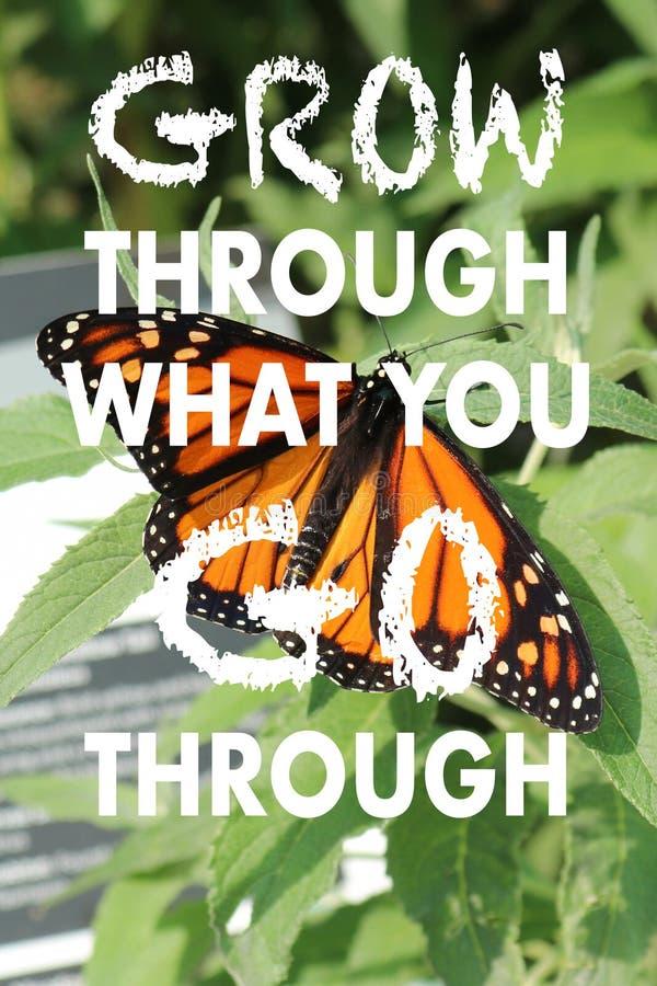 Cita positiva en una mariposa del vagabundo del monarca y un fondo verde fotografía de archivo