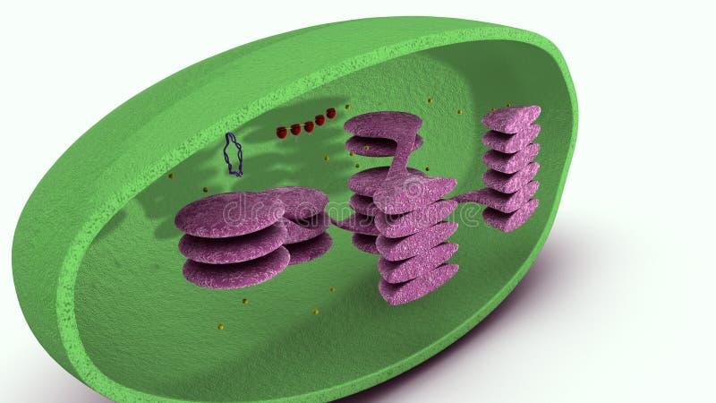 Citoplasma a forma di della tazza illustrazione vettoriale