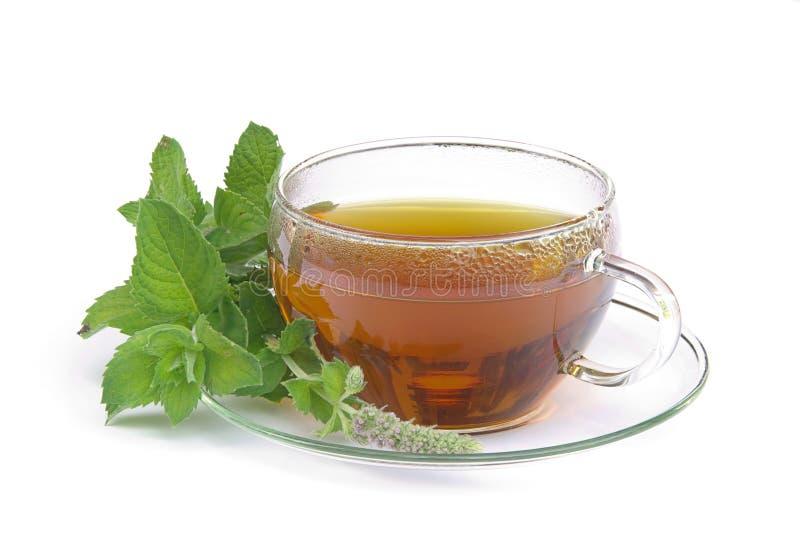 Citrata 01 do Mentha do chá fotografia de stock