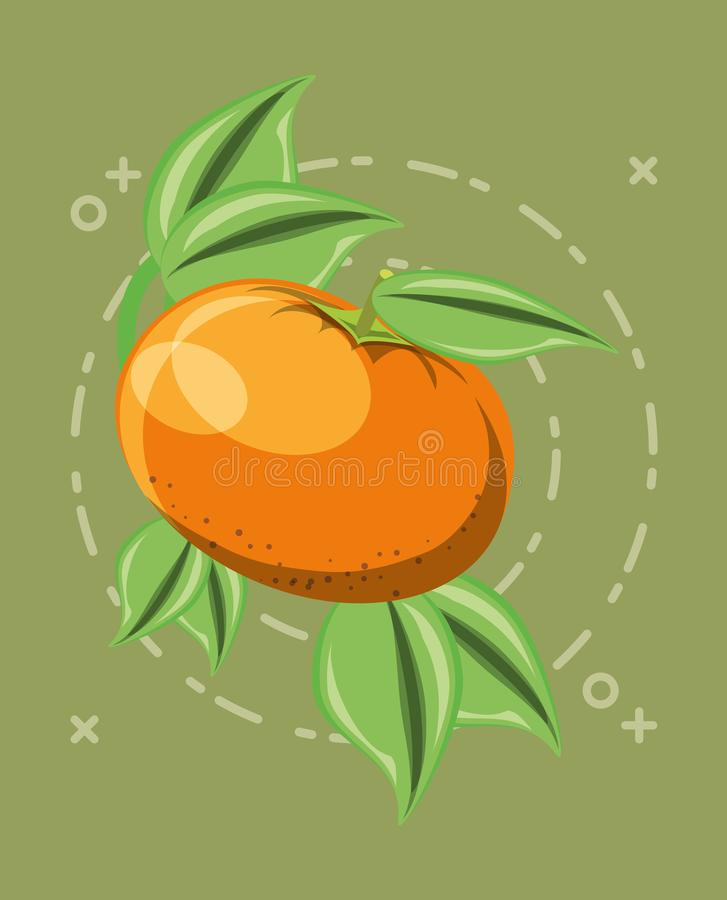 Citric fruits design. With tangerine and leaves icon over green background, colorful design. vector illustration royalty free illustration