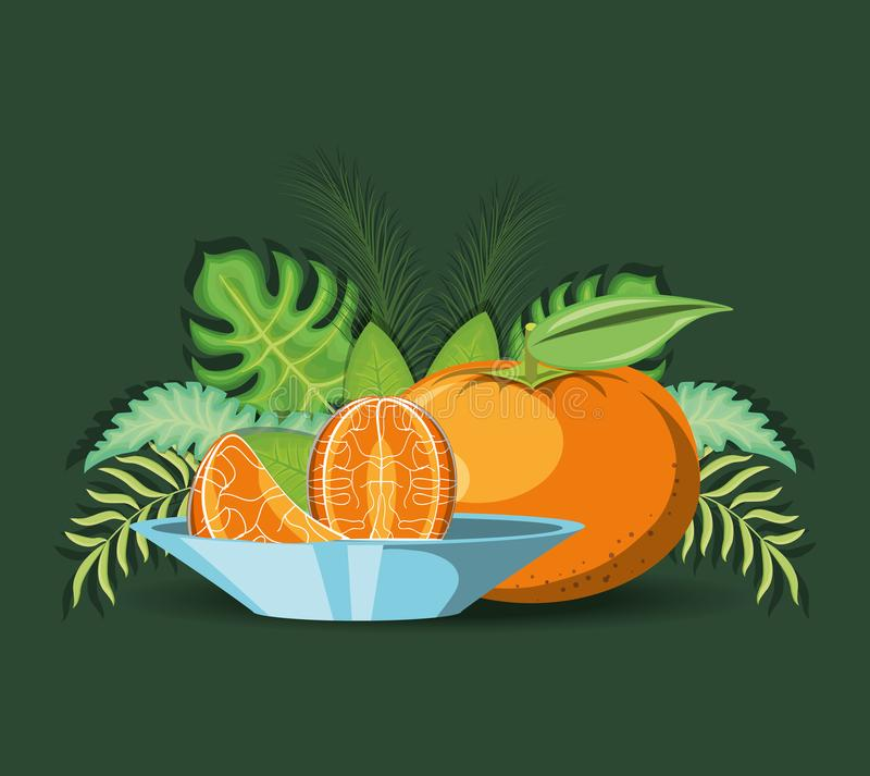 Citric fruits design. Tropical leaves and tangerine and dish with segments over green background, colorful design. vector illustration vector illustration
