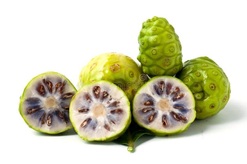 Citrifolia di Morinda immagine stock libera da diritti