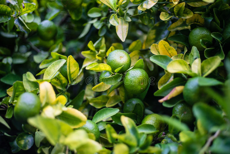 citrino fotografia de stock