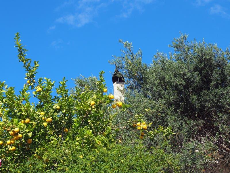 Citroen en Olive Trees royalty-vrije stock fotografie