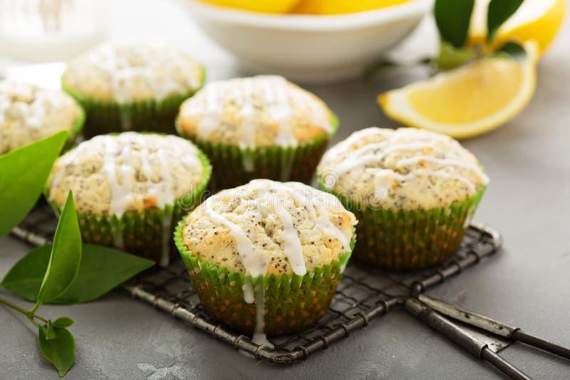 Citroen Poppy Seed Muffins stock afbeeldingen