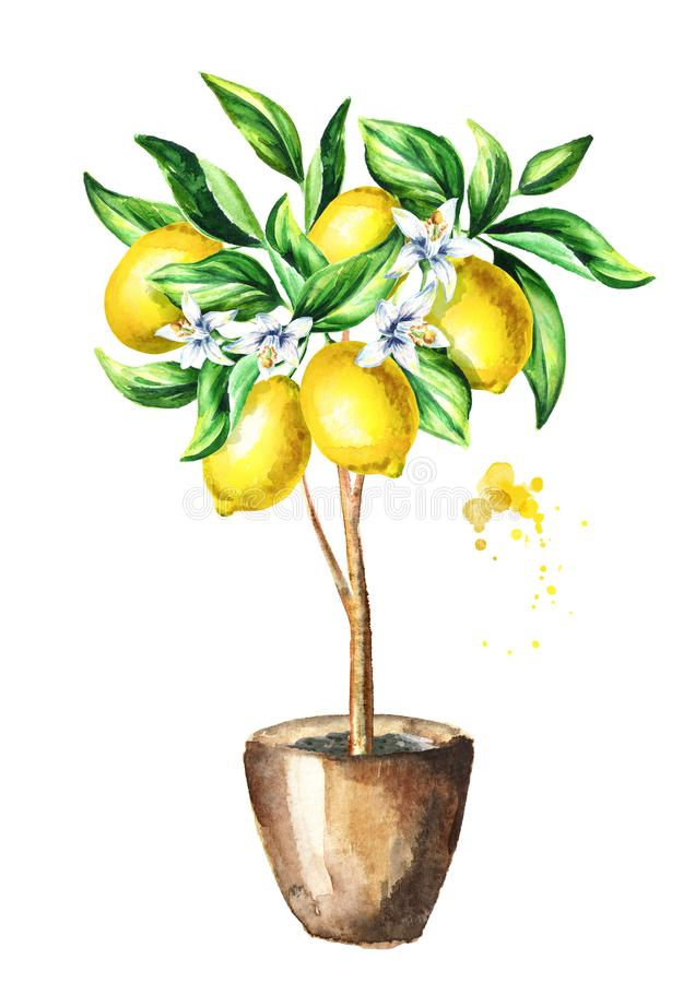 Citroenboom met fruit en bladeren Waterverfhand getrokken verticale illustratie royalty-vrije illustratie